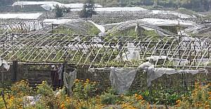 ネパール近郊農業